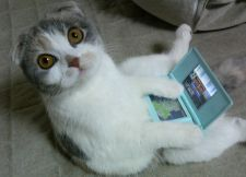 Cat playing DS